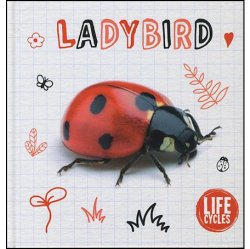 Life Cycles - Ladybird