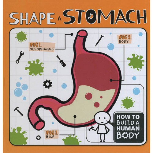 How To Build A Human Body - Shape a Stomach
