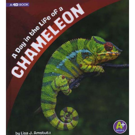 A Day in the Life - A Day in the Life of a Chameleon
