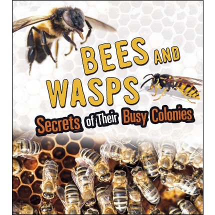 Amazing Animal Colonies - Bees and Wasps