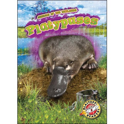 Animals of the Wetlands - Platypuses