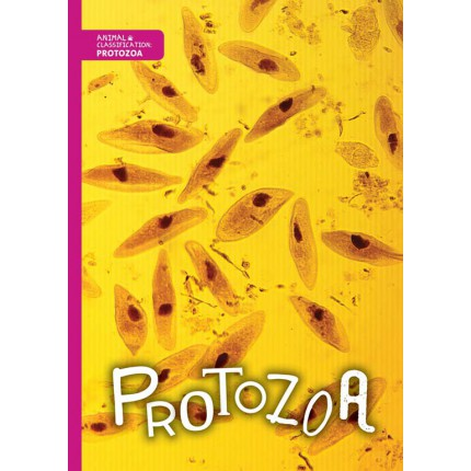 Animal Classification - Protozoa