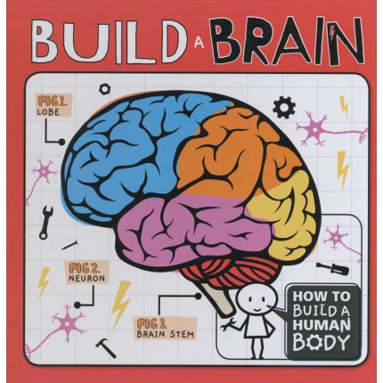 How To Build A Human Body - Build A Brain