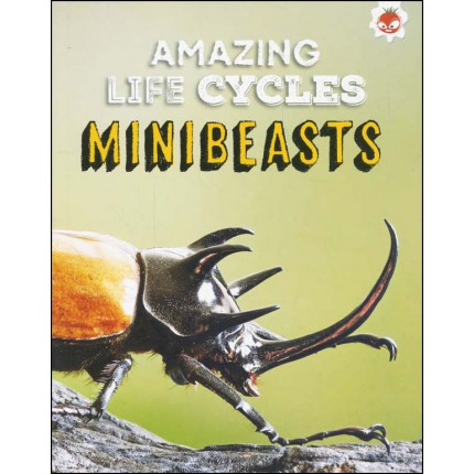Amazing Life Cycles - Minibeasts