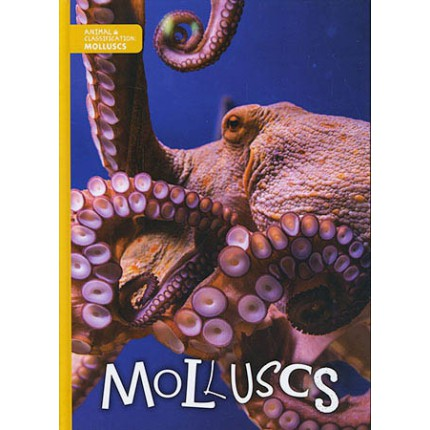 Animal Classification - Molluscs
