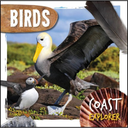 Coast Explorer - Birds