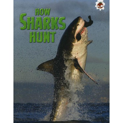 Sharks! - How Sharks Hunt